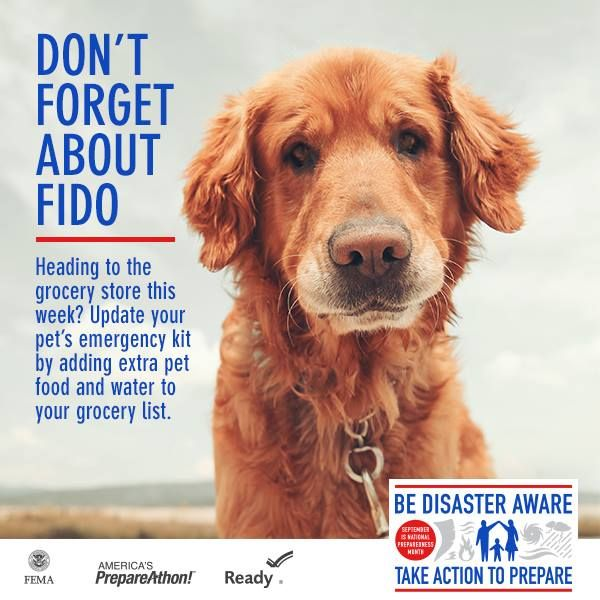 FEMA Disaster Pet Preparedness